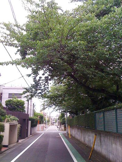 tree-space.jpg