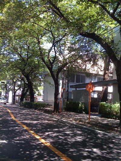 tree-space01.jpg